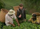This World – The Tea Trail with Simon Reeve
